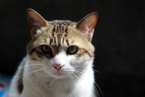 如何应对猫眼流脓的惩罚