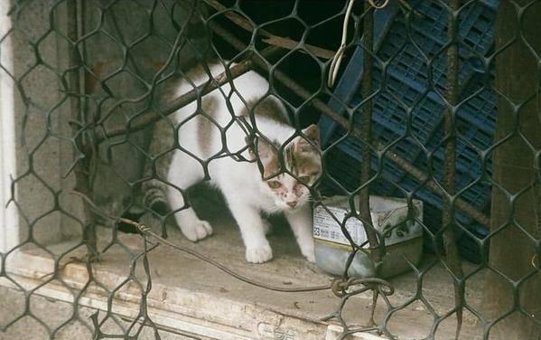 """原创 落难猫被领养后""""酿成兔子"""",网友笑翻了"""