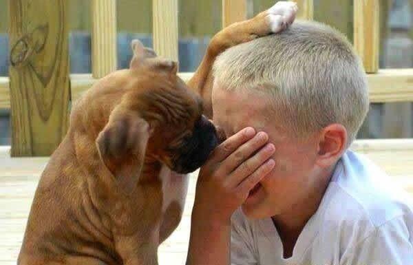 """原创 狗狗喜欢舔你,原来藏着许多""""隐秘"""",喜欢你只是其中一个理由"""