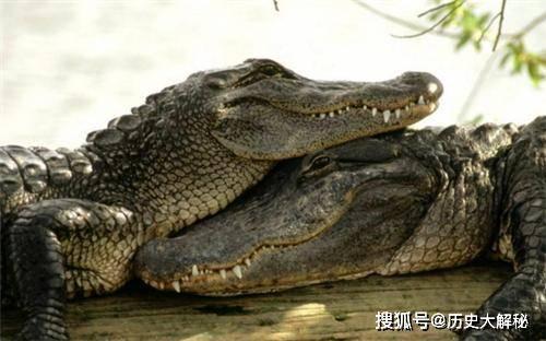 原创 她身高仅1米6,杀掉世界上最大的鳄鱼,一举成名,晚年却后悔不已