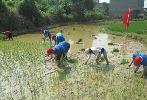 农村大学生放暑假,是在外面打工锻炼好?还是回家帮父母干活好?