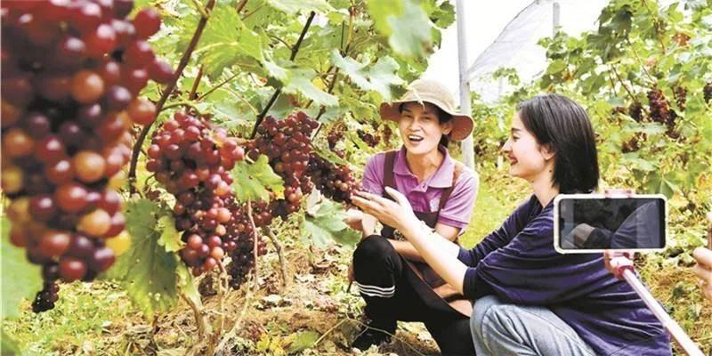 农产物直播要驻足农业工业链谋久远
