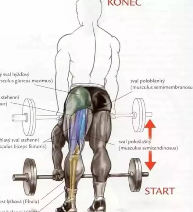 你能够摸到自己的脚尖吗?如何提高身体柔韧性? 减脂食谱 第6张