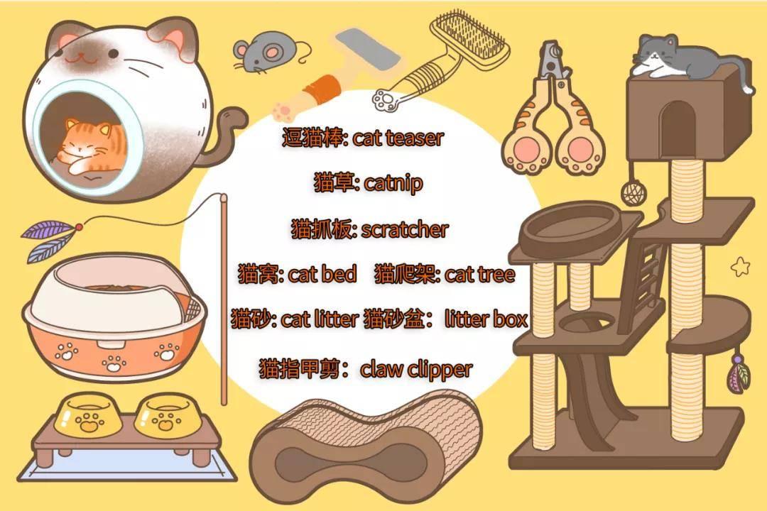 猫人|国外某公司招聘职业撸猫人,月薪2万欧!想去?先学会撸猫吸猫英文吧