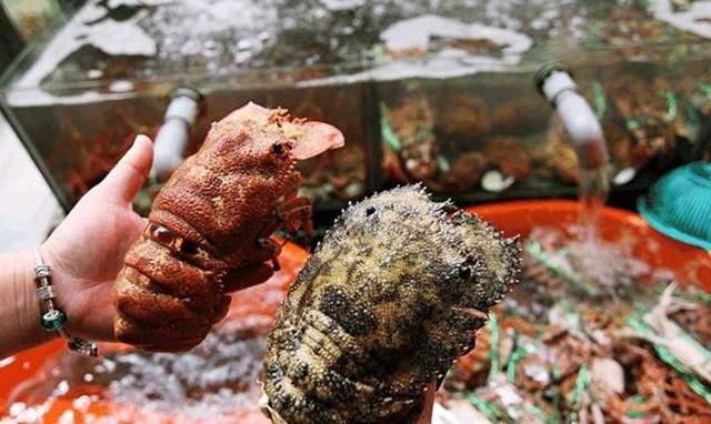 """去柬埔寨吃海鲜,随便点了两只的""""拖鞋龙虾"""",结账时我愣住了"""