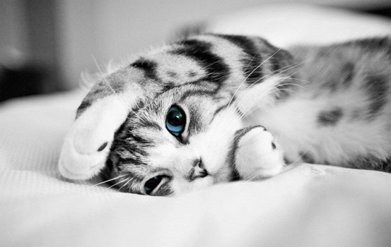 【猫咪】狗子和猫咪哪个智商高?六个小测试告诉你答案,