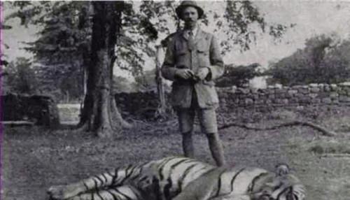 原创 世界上最凶狠的老虎,436人葬身虎口,被击毙后才发现它吃人真相