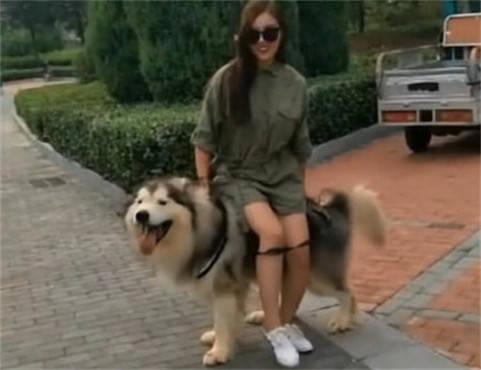 女子带狗子出去溜达,累了想坐在狗身上休息,结果下一秒尴尬了