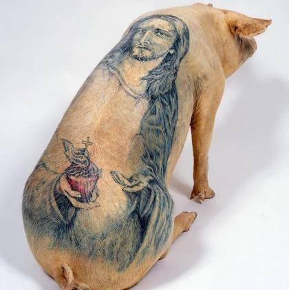 原创 这年头猪都这么精致了!每天洗三次澡还涂防晒,一张纹身皮卖百万