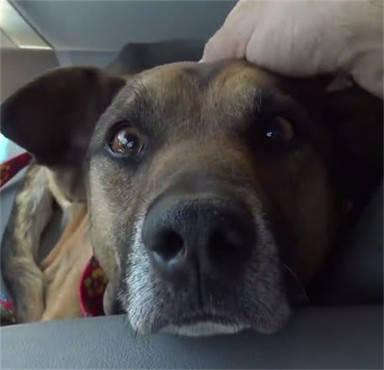 原创 狗狗被人丢在垃圾堆,两眼无神看向行人,被救时露出一脸不相信