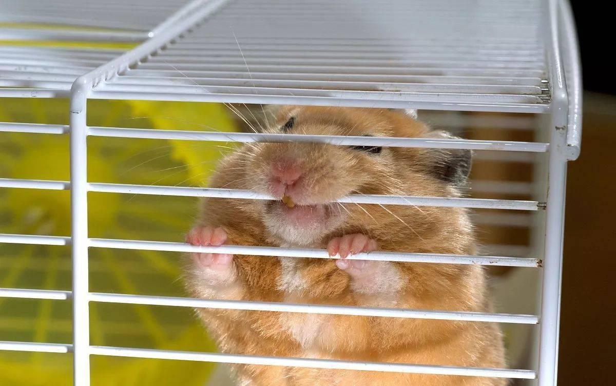 """你给仓鼠住的笼子真的是""""别墅""""吗?最全面的仓鼠笼选购攻略 (图3)"""
