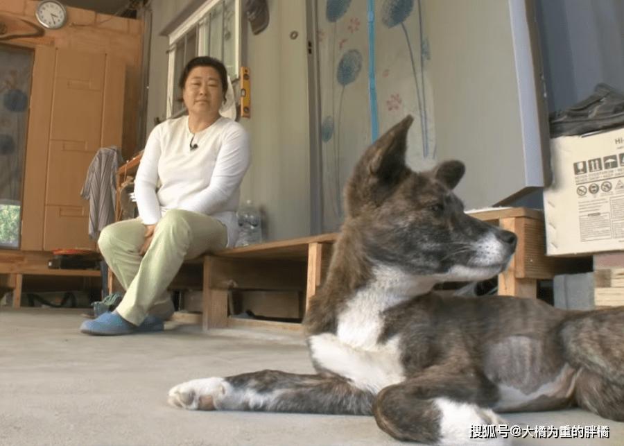 """原创 狗狗不幸出了车祸,主人将其埋葬4天后,它竟""""事业般""""地回到家"""
