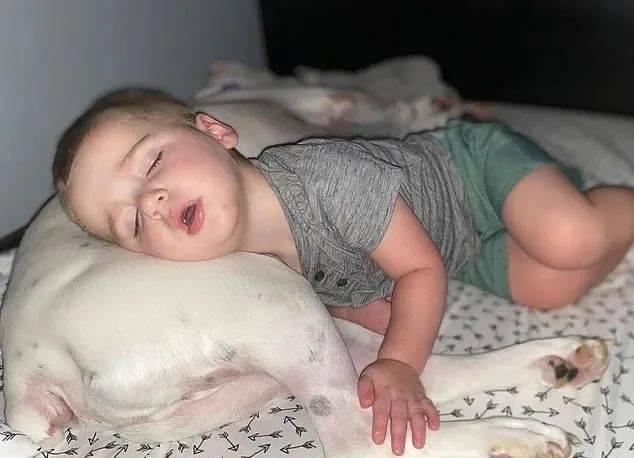 原创宝宝半夜从床上翻下来,以为他要去找妈妈,结果:还是狗窝最舒服