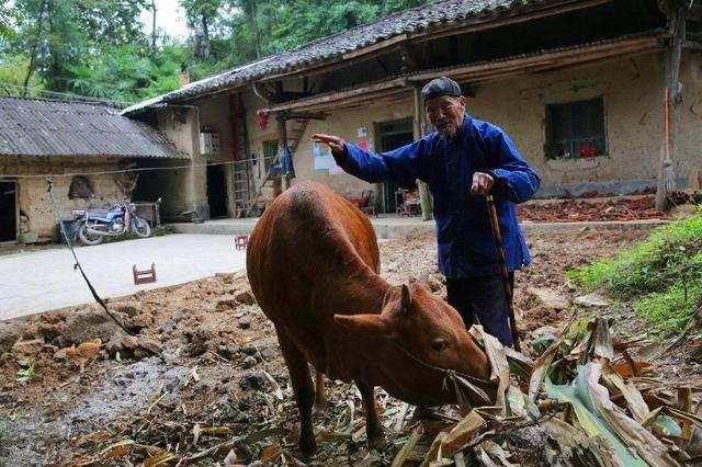 陕西老农出门放牛,挖到到一大铁疙瘩,洗干净后发现竟是无价之宝