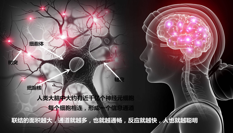 后意识音乐开发右脑 迈向 新人类 进化的一大步
