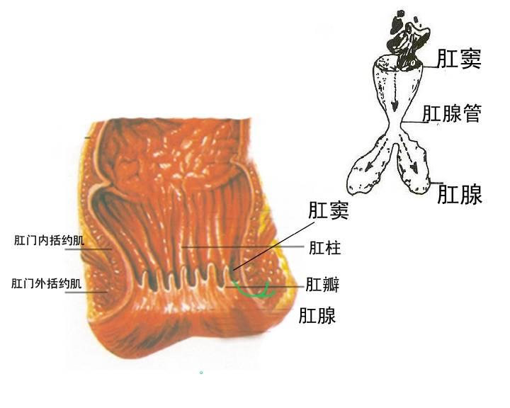 散粒肿手术的原理_散粒肿手术过程图解
