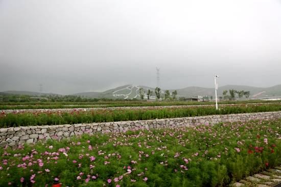在石头上种花的废弃采石场成为一个景点