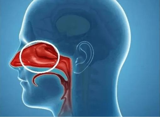 清鼻堂 著名导演因<a href=http://www.asiavvip.cn/biyanai target=_blank class=infotextkey>鼻咽癌</a>去世 看到鼻炎和鼻咽癌的关系,你还敢不重视吗