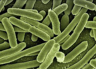 《 PLOS Biology》发表UCSD研究:口腔细菌破坏阴道微生物平衡