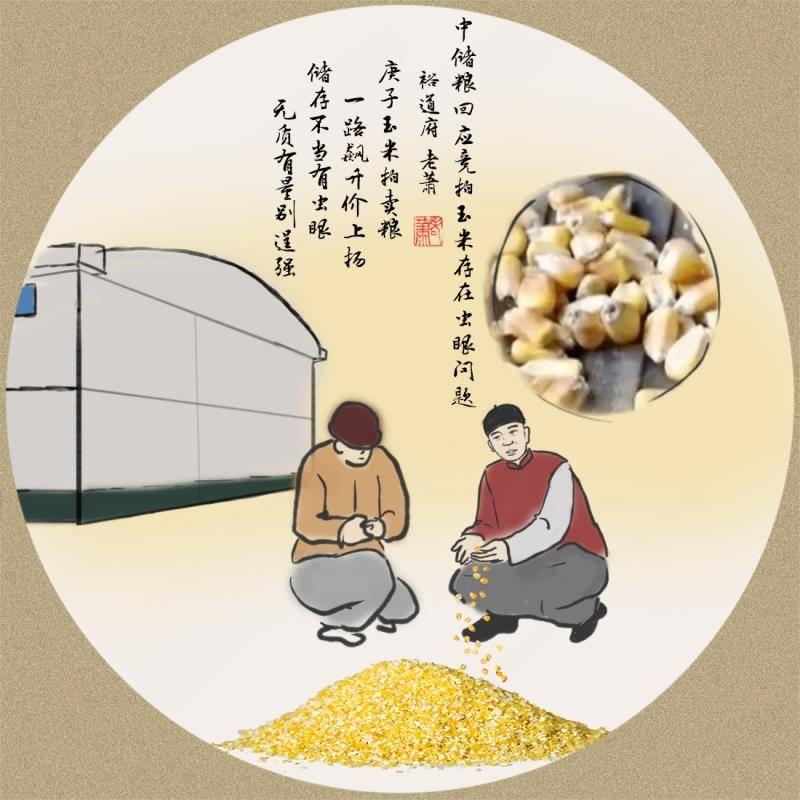 中储粮回应玉米拍卖出现虫眼问题--玉道