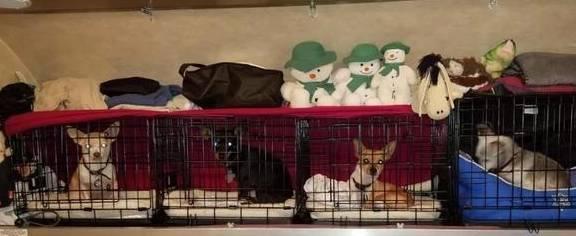 你知道当狗突然把狗扔进笼子时压力有多大吗? 狗狗扔狗粮