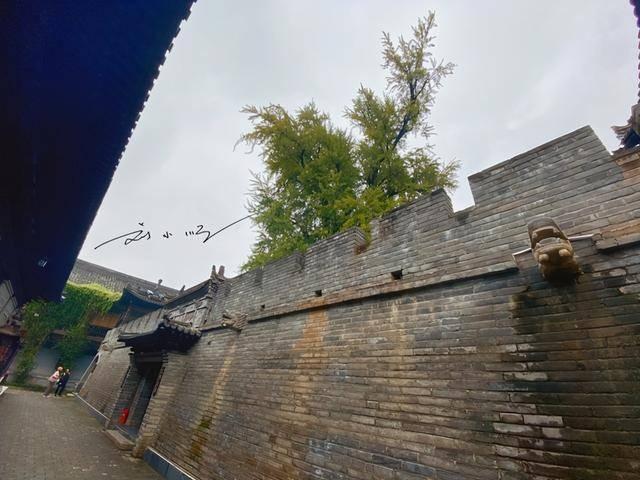 """西安有一棵千年古树,据说是唐太宗李世民栽种,如今变成""""网红"""""""
