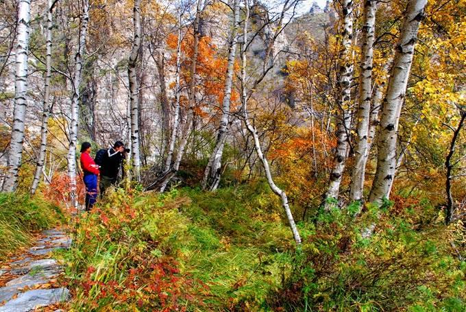 十一假期好去处,保定白石山金秋红桦节盛大开幕,秋色美如画