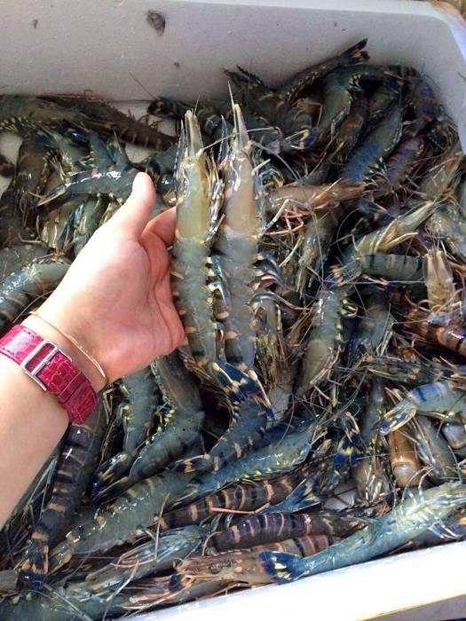 中秋买大虾,这4种别再买了,尤其第二种,再忙也一定要看仔细