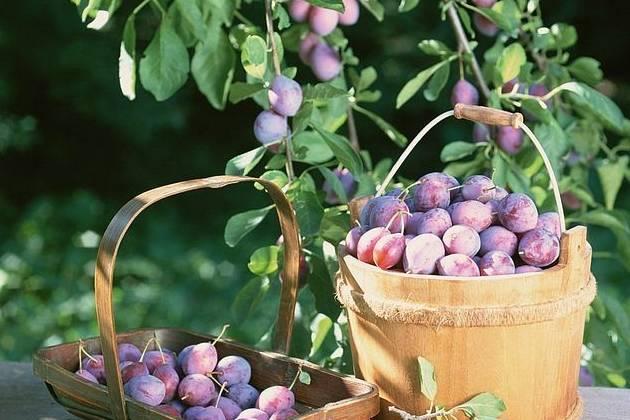 肝不好,此水果每天吃一点,能和肝气,养肝血,还你一个好身体