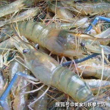 另一种虾入侵中国 一斤重 中国吃的食物:终于可以上瘾了