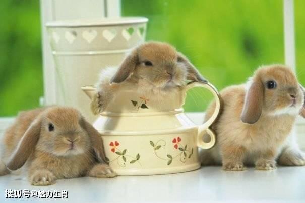 """十二生肖兔:最近2天 会有一个""""哭"""
