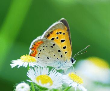 心理测试:选一只花上最美的蝴蝶,测近期你的运势会怎样