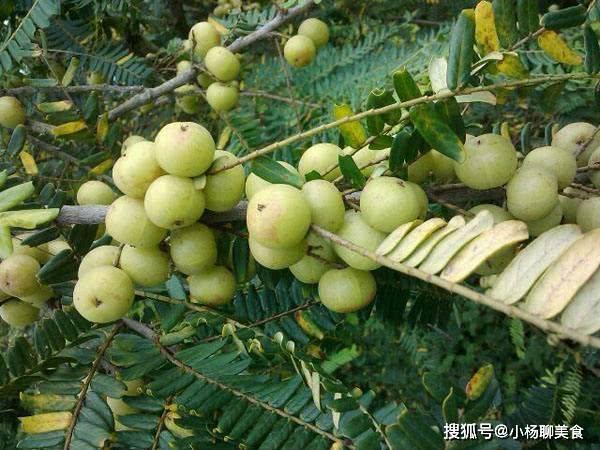 """找到了天然的""""止咳方子"""" 这种水果被挑回家煮 用来润喉 冬天它不咳嗽"""