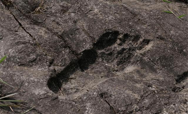 英超直播:史前文明出现了?科学家发现了巨大的脚印 轮廓清晰可见!