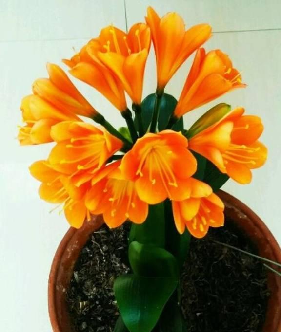 4种花 室内一定要栽培 赏心悦目大气 看花和叶泉