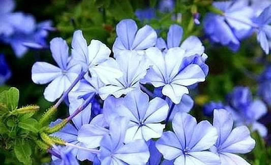"""一个新手养花,就可以举起这五种""""练手""""。如"""