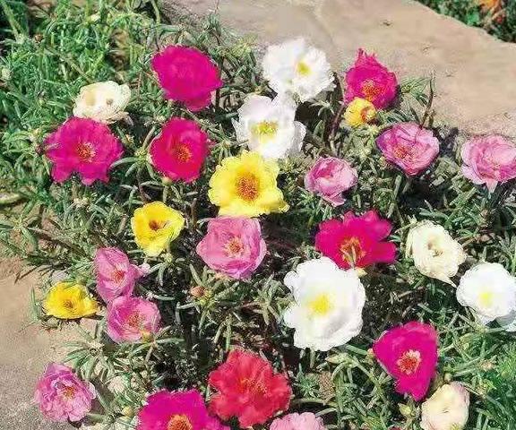 初学者在夏天选择这四种花,意味着他们