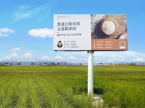网易严选开售五常有机稻花香新米,正宗原产地好味,锁鲜送达