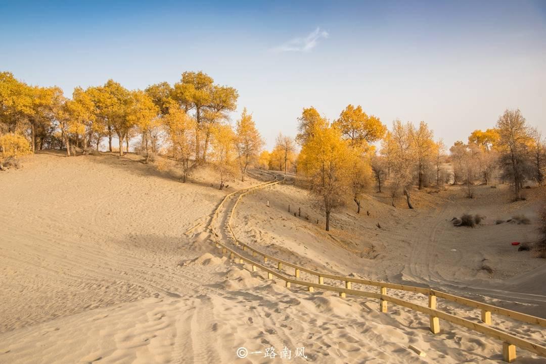 """深秋一到,新疆和田就美成油画,路边的胡杨好像披了一身""""黄金"""""""