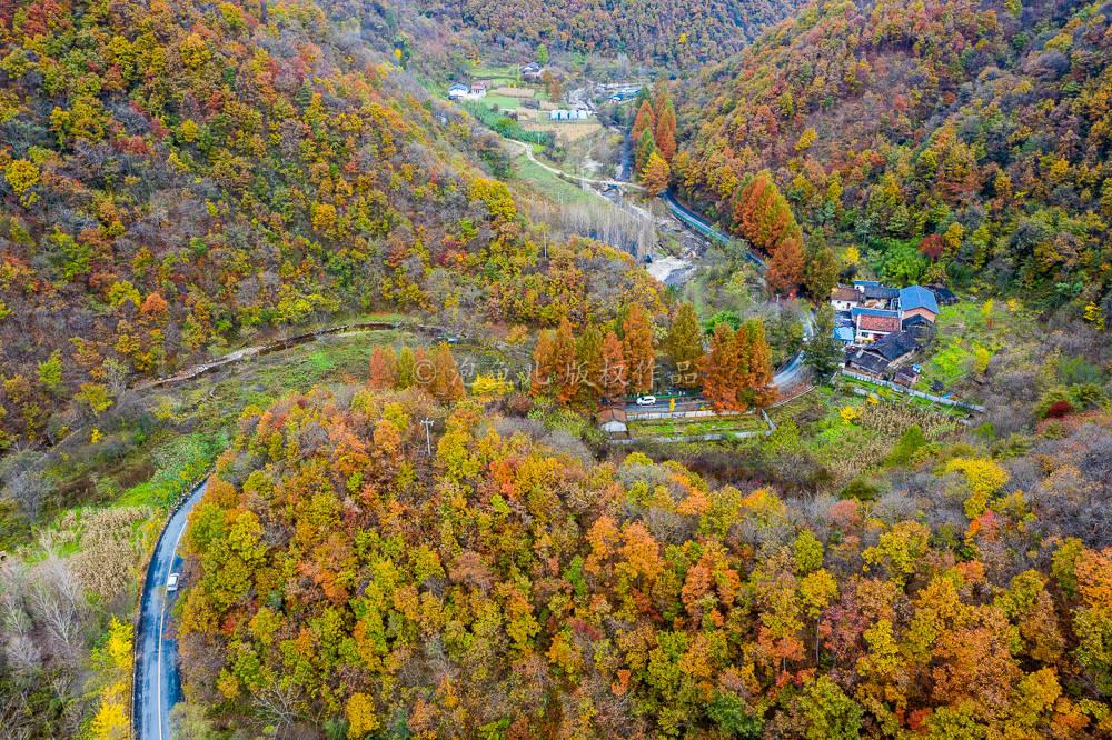 探寻秦岭赏秋秘境,跟着这条自驾线路走,告诉你留坝的秋天有多美