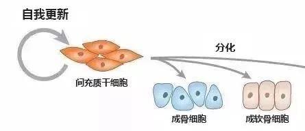 健康说|筋膜—人体免疫力、自愈力的关键?