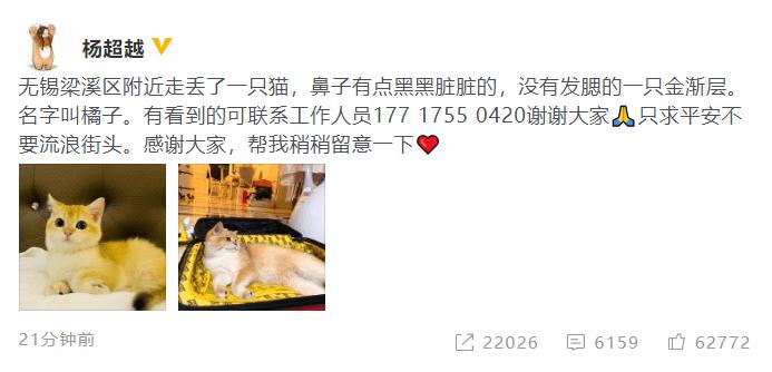 杨超越的猫走丢了 发文求救:只求平安不要流浪街头