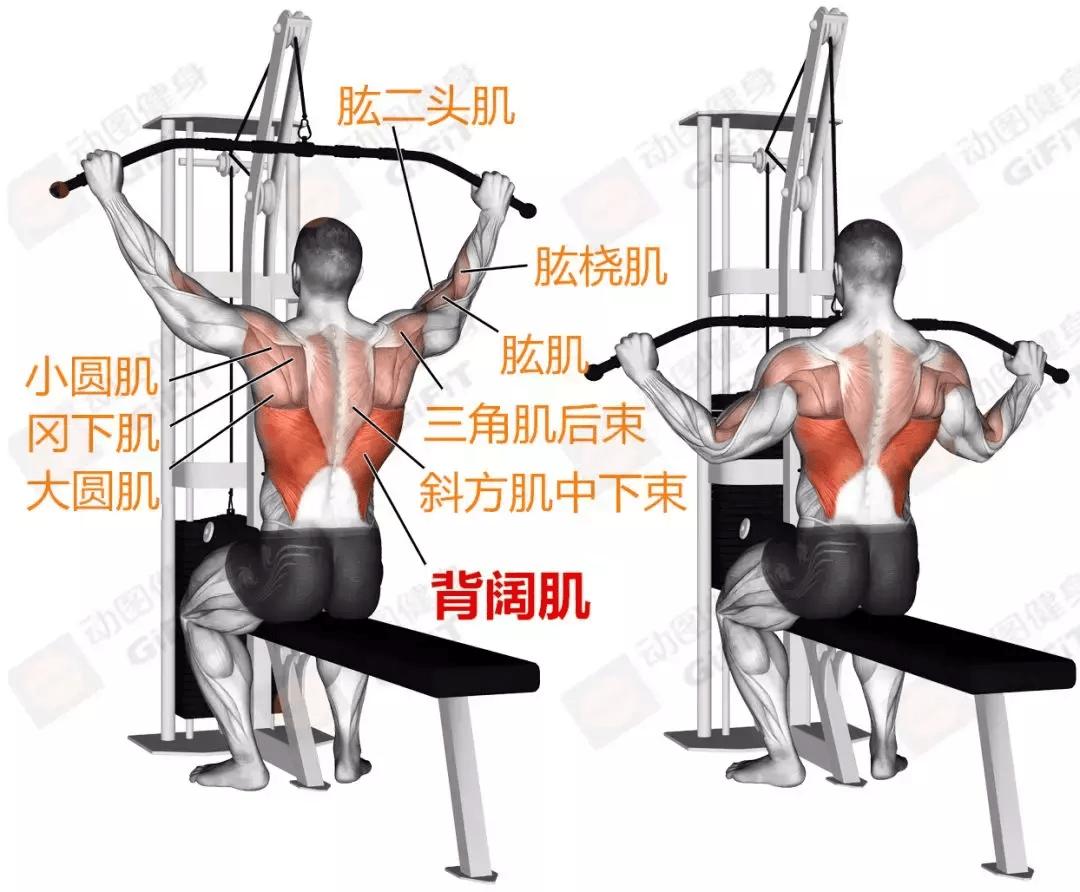 3个动作强化背肌,让你练出宽厚的背部线条!