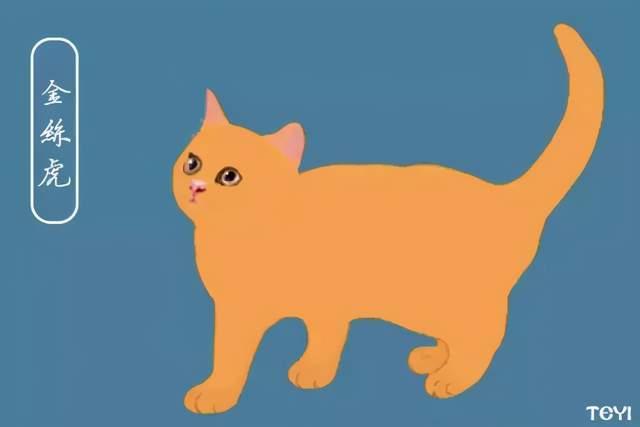 中华田园猫的品种尺玉宵飞链图片