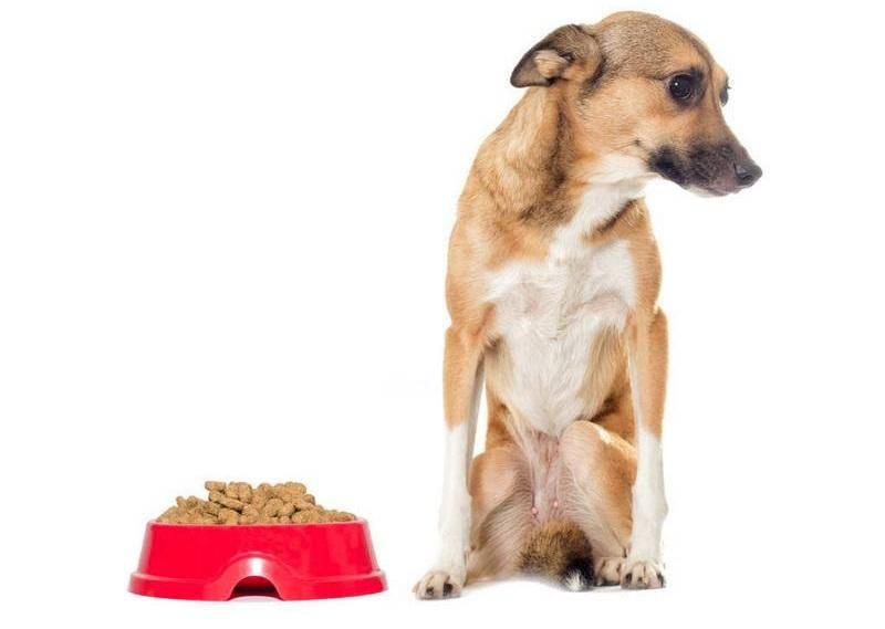 怎么训练你家狗不乱捡东西吃fes