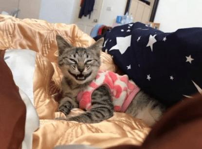女主说要带猫咪出去玩,结果猫咪就这副表情,主人都笑喷了!