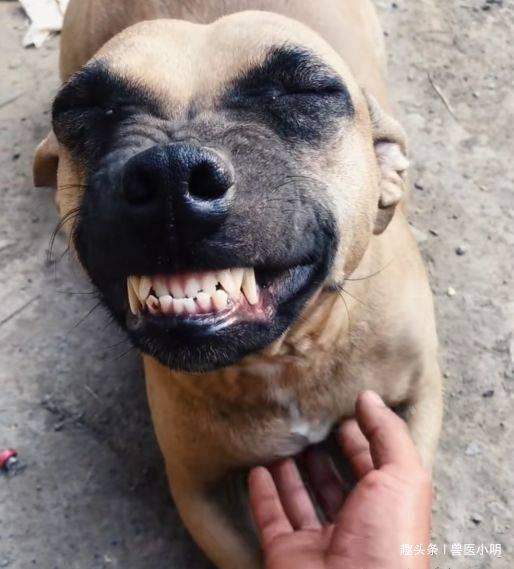 狗狗从屠宰场被救下,看到救命恩人时,做出的反应让人笑中带泪 (图4)