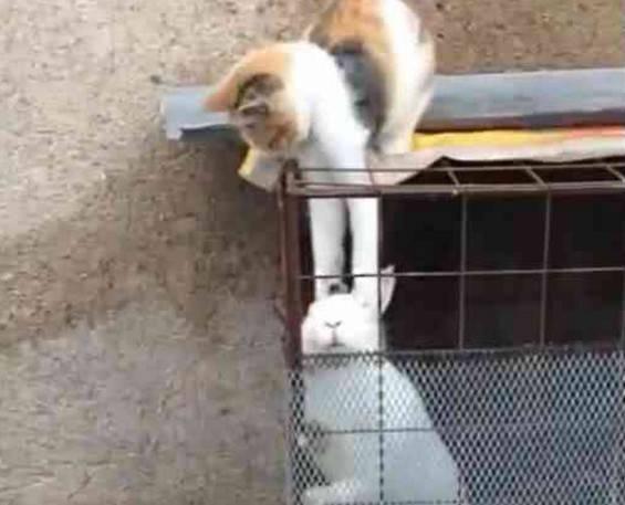 小肥猫偷邻居家兔子,直接拎兔子耳朵,兔子生无可恋:耳朵要没了