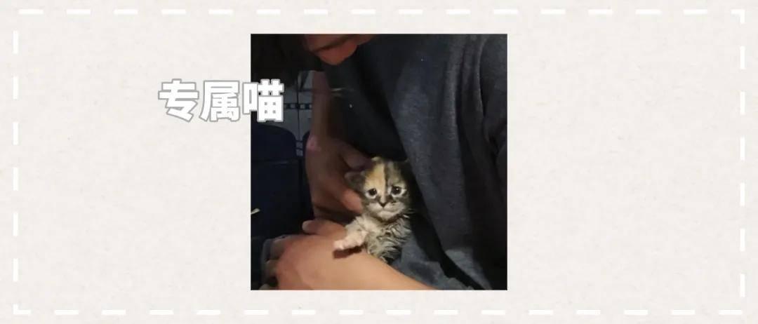 原来瘦瘦的流浪猫获救了。它对救世主莫莫很顺从,但对一个少年也很顺从