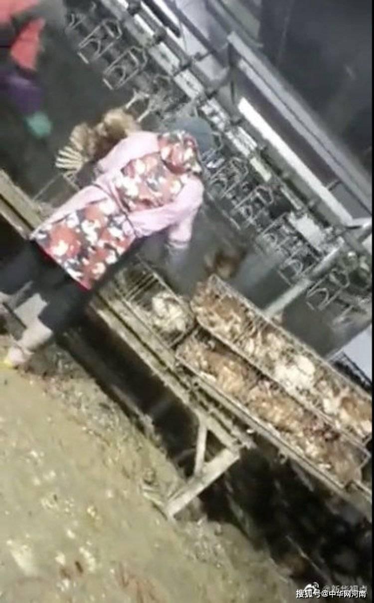 安徽马鞍山屠宰场违规生产后续:问题企业被责令停产并拆除临时生产设备